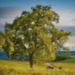 Familienstammbaum, Wallisch-Tomasch, Storchennest Frohnleiten