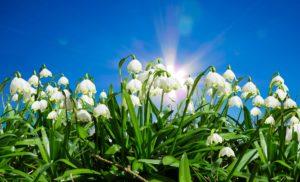 Frühling in Frohnleiten