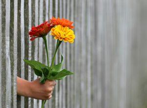 Weiterbildung Blumen Storchennest